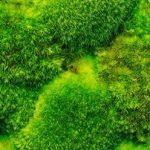 10-Scientific-Benefits-of-Moss-Walls-INLINE2.jpg