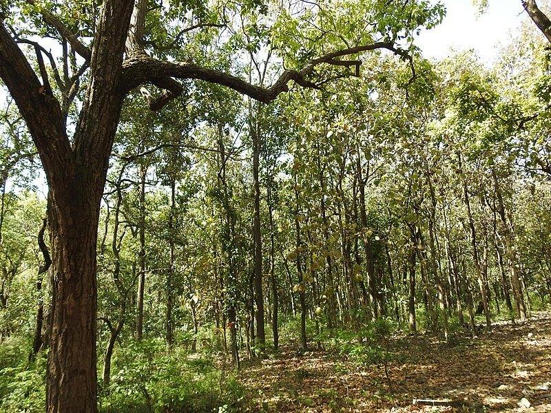 forest in Deharadun