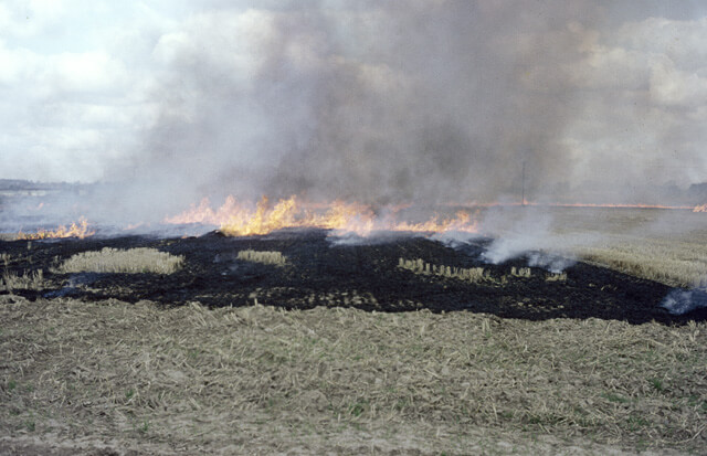 farmers burning stubble