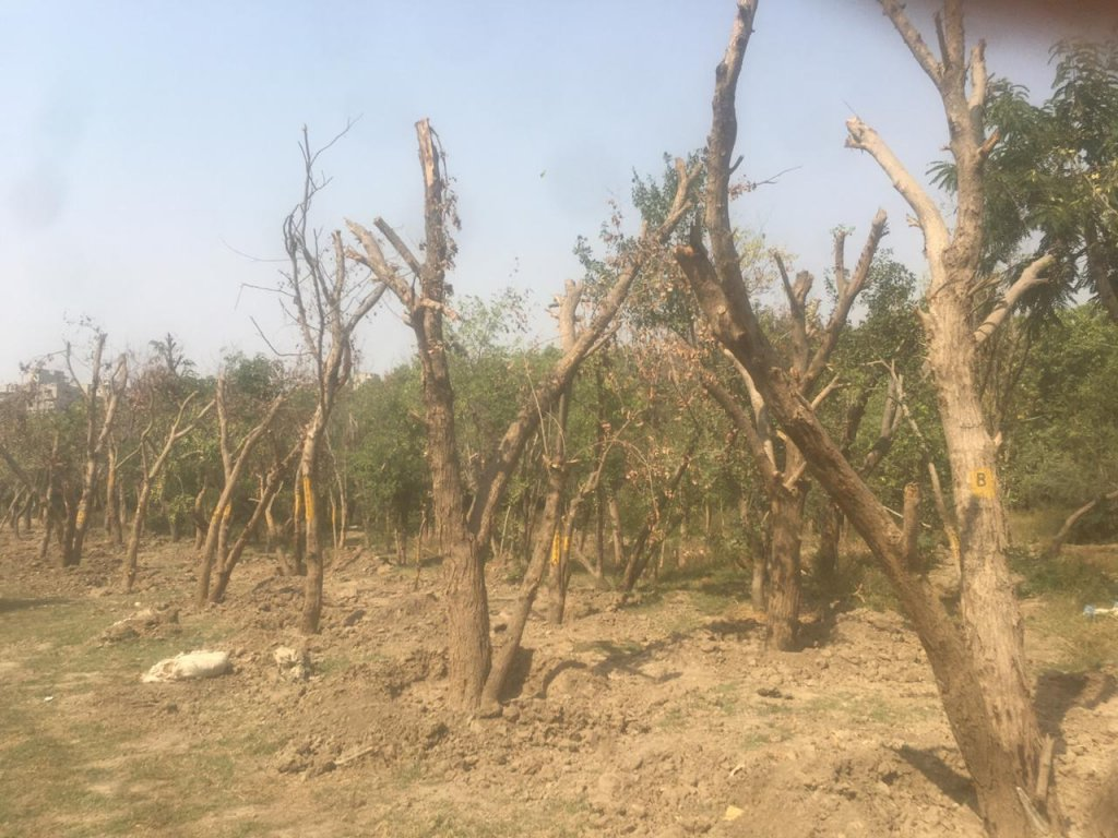 Trees transplanted in Dwarka